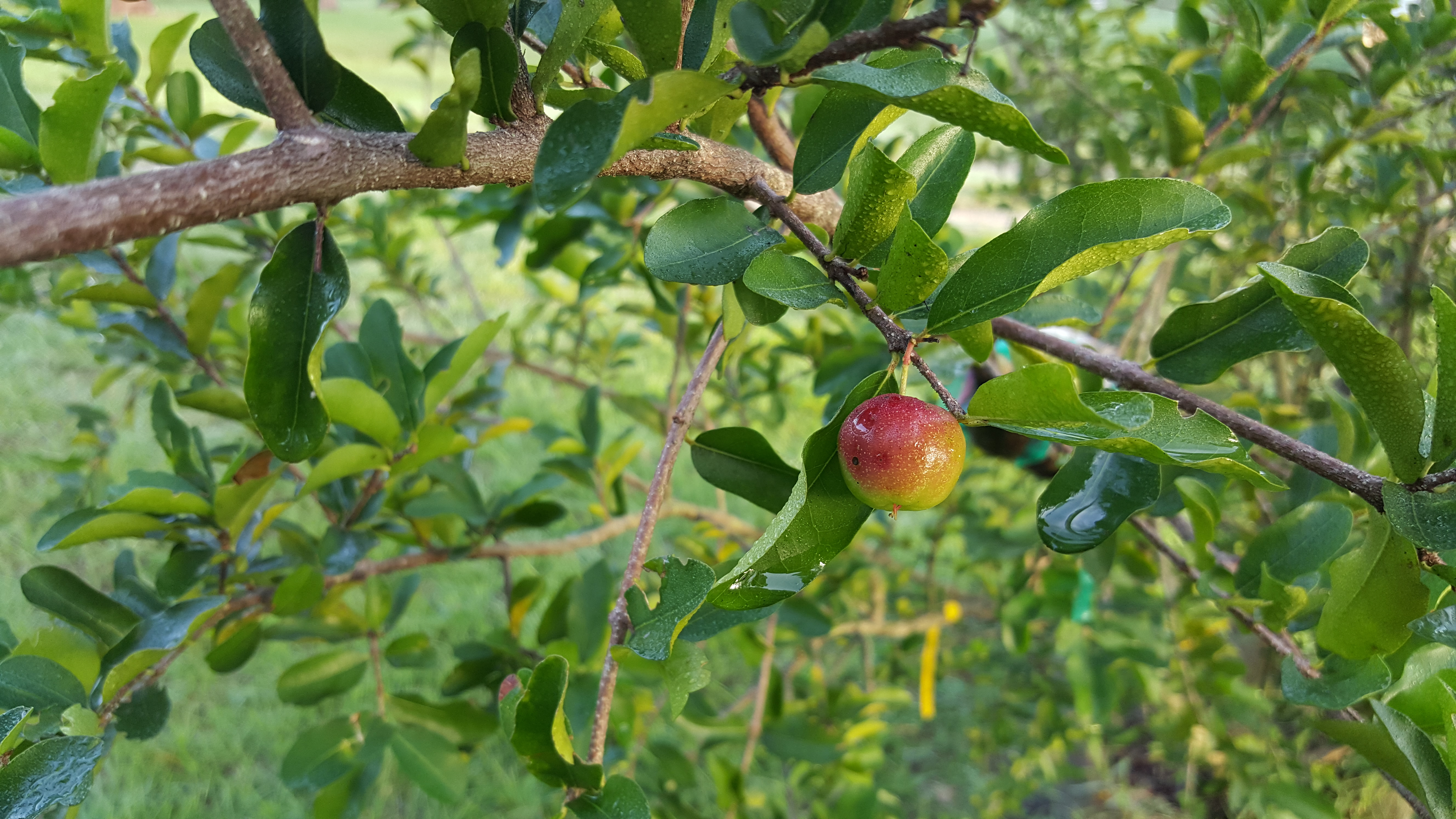 Fruit trees for your food forest moneyrhythm for Fruit trees